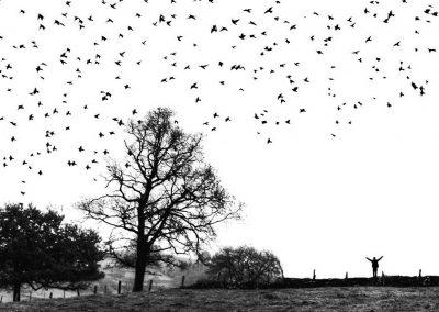 Los pájaros, Trondheim